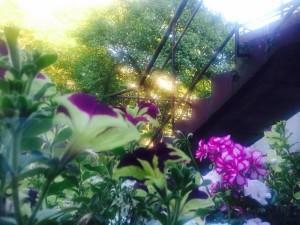 blog8-foto